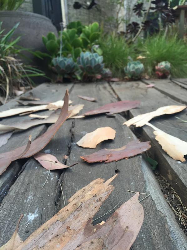 Fallen bark on boardwalk