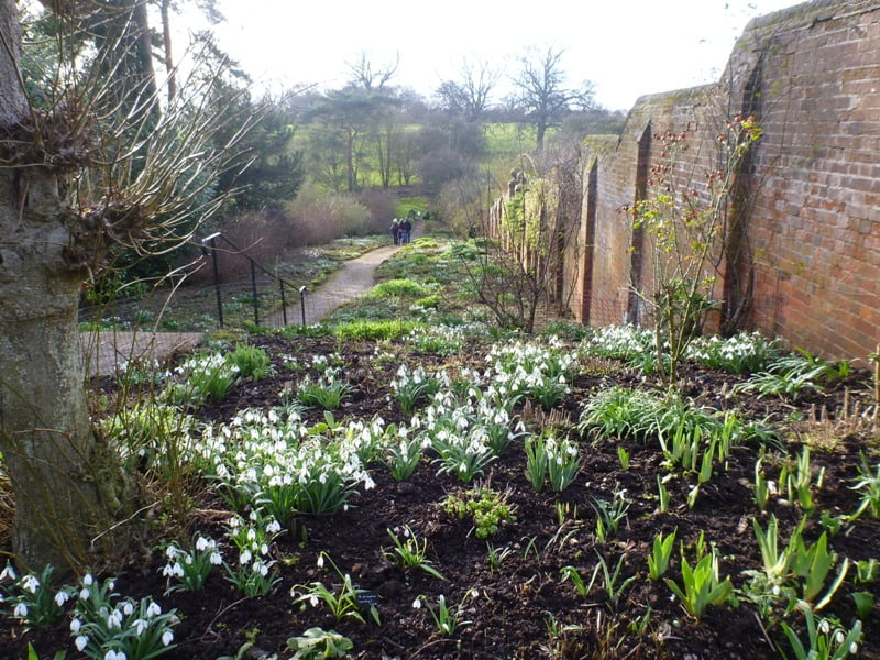 Herbaceous border planted with rare snowdrop varieties at Benington Lordship