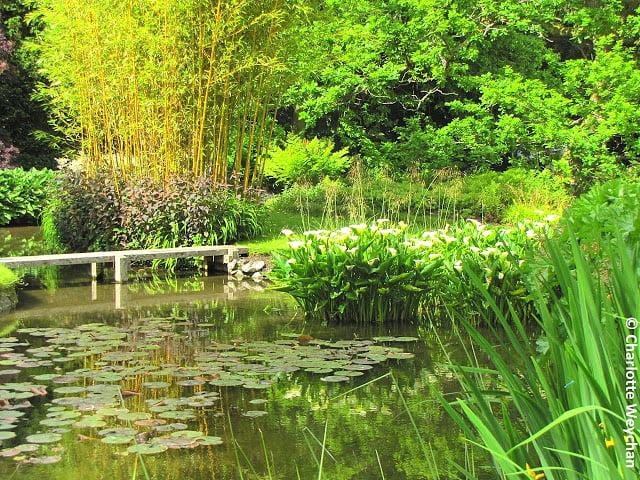 Longstock Park Photo courtesy Charlotte Weychan, The Galloping Gardener