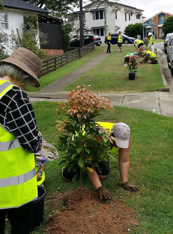 Planting replacement street trees