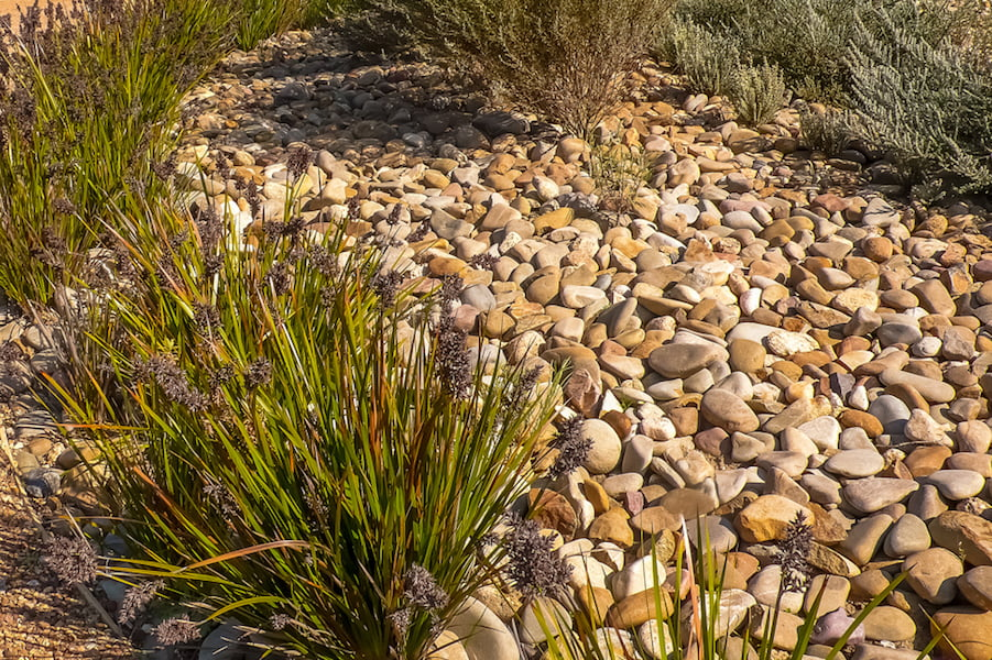 Ellis Stones loved to create dry creek beds like this lovely example at Royal Botanic Gardens Cranbourne (Anne Vale)
