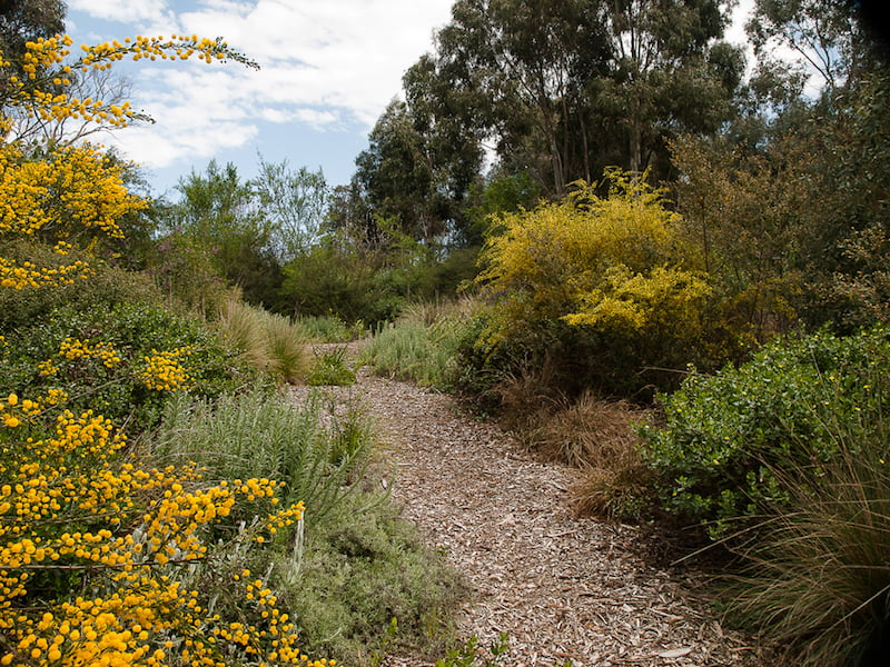 Making Australian Gardens With A Sense Of Place Gardendrum