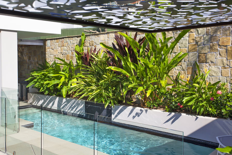 Small garden with narrow pool. Design Utopia Landscape Design Brisbane