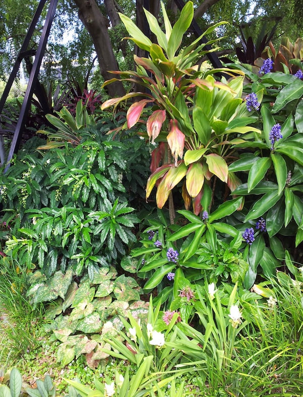Tropical foliage plants are adapted for high humidity and many will struggle without it