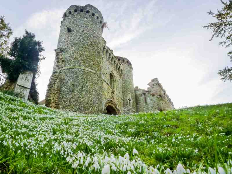 Benington Lordship - ruined castle and keep plus snowdrops