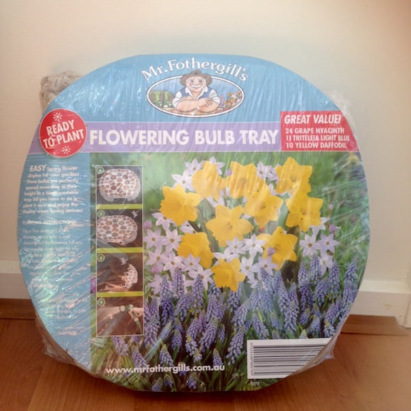 Mr Fothergill's Flowering Bulb Tray presentation
