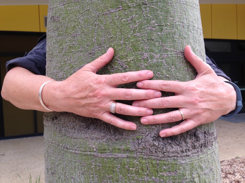 A Truly Huggable Tree. Photographer Sharon Willoughby