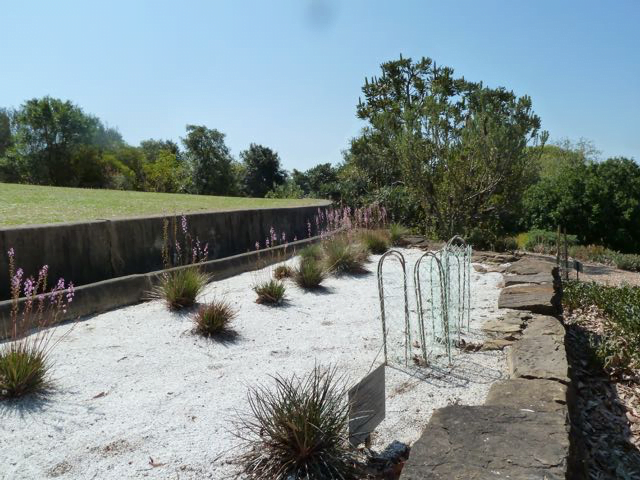Gravel-based mulch is useful for plants from low nutrient environments like this Stylidium productum which grows in moist soils of sandstone regions. Photo taken at the Australian Botanic Gardens at Mount Annan by Heather Miles.