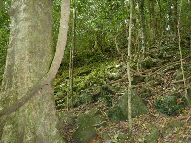Natural mulch cover of rocks, moss and leaf litter in a dry sclerophyll rainforest. Photo: Heather Miles