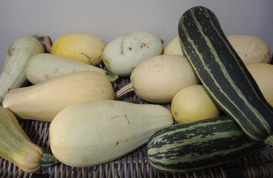 Yet more marrows and squash lurk in the spare room...