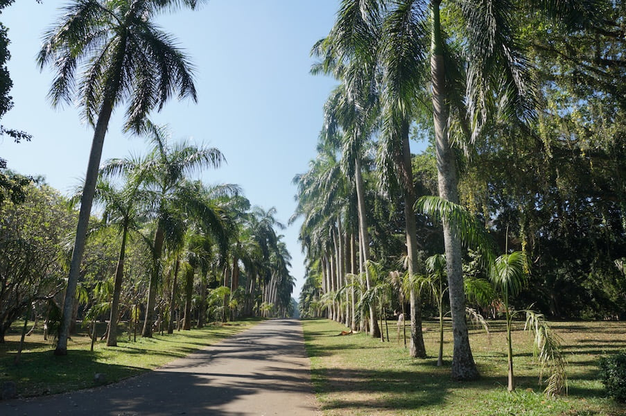 Impressive avenue of Royal Palms at Royal Botanic Gardens at Peradeniya, Kandy, Sri Lanka