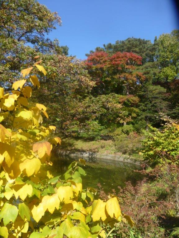 Sassafras and maple colours