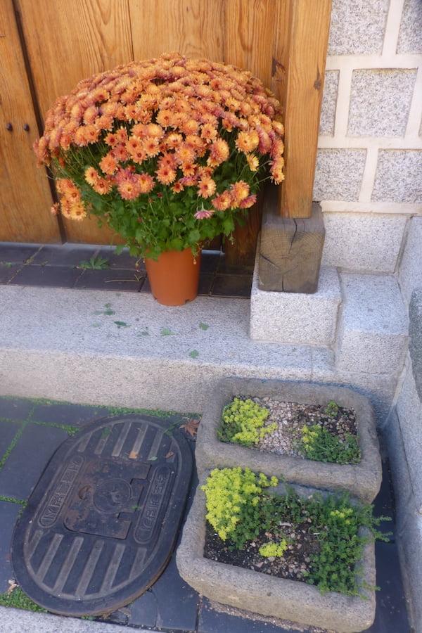 Seoul green doorstep