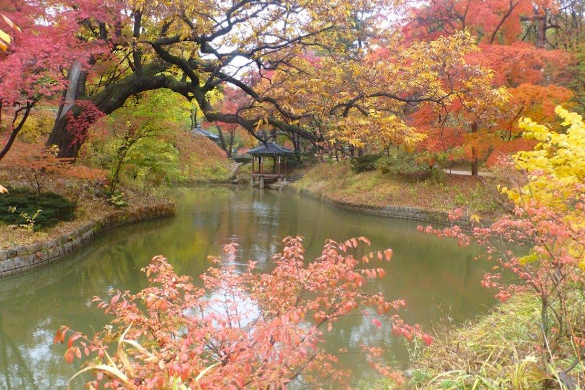 curved pond and maples