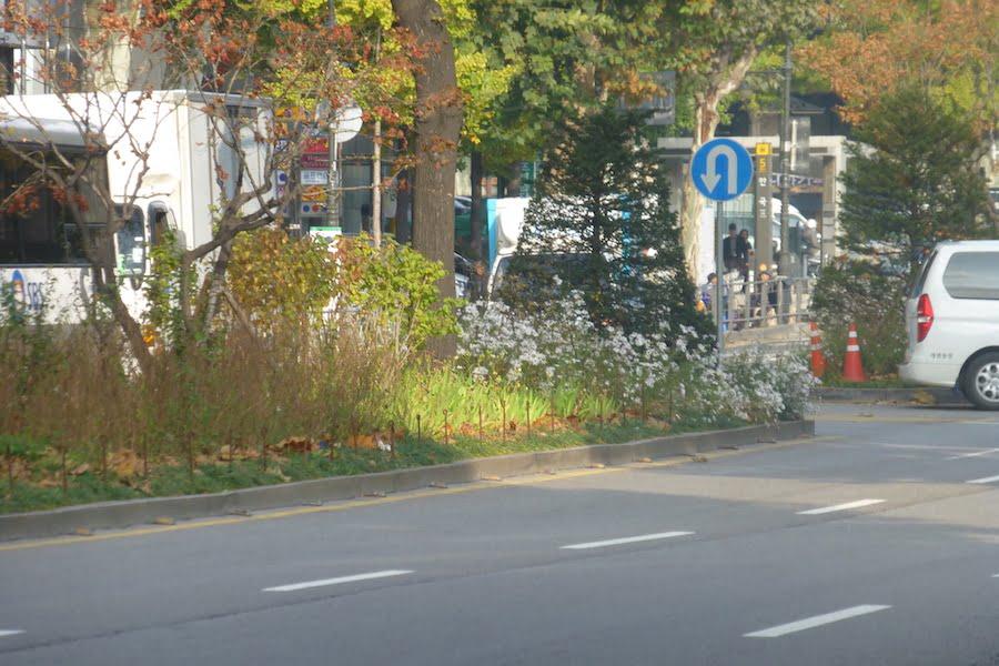 Median strip with flowering perennials