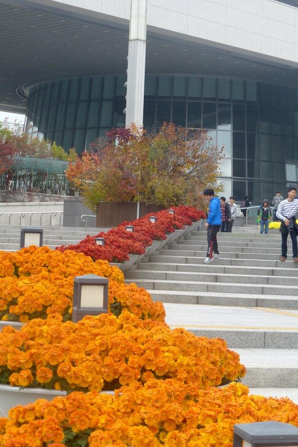 National Museum step greening, Seoul