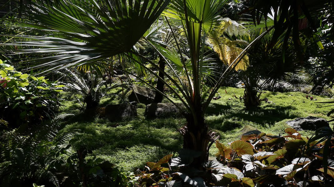 Palms, cycads, begonias in Estufa Fria, Lisbon. Photo Dana Frigerio