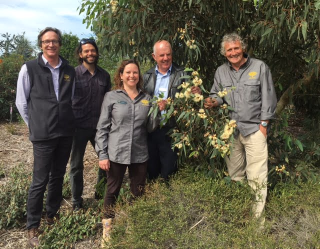 Russell, Chapman, Bren, Arnott and Ashton Eucalypt trail at Cranbourne gardens