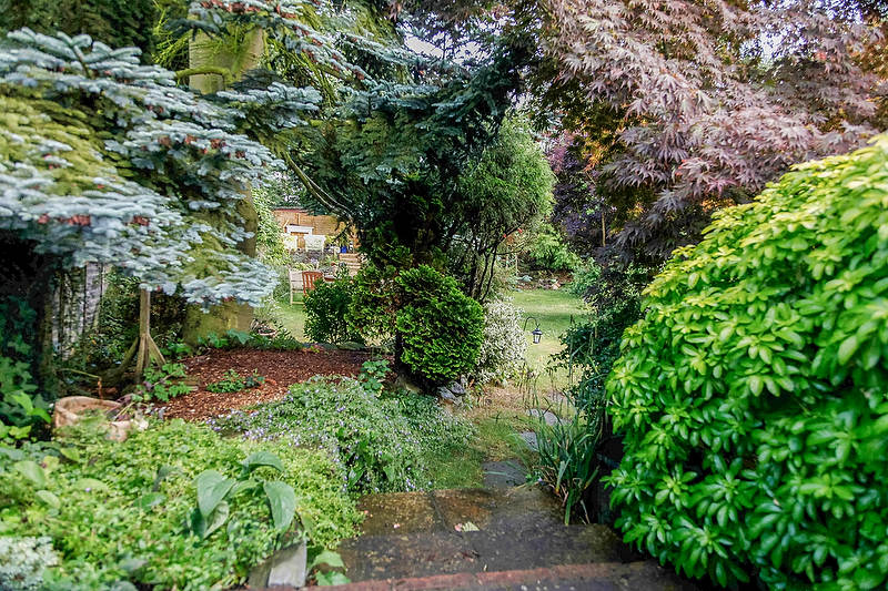 The dark neglected corner of the garden under a large conifer