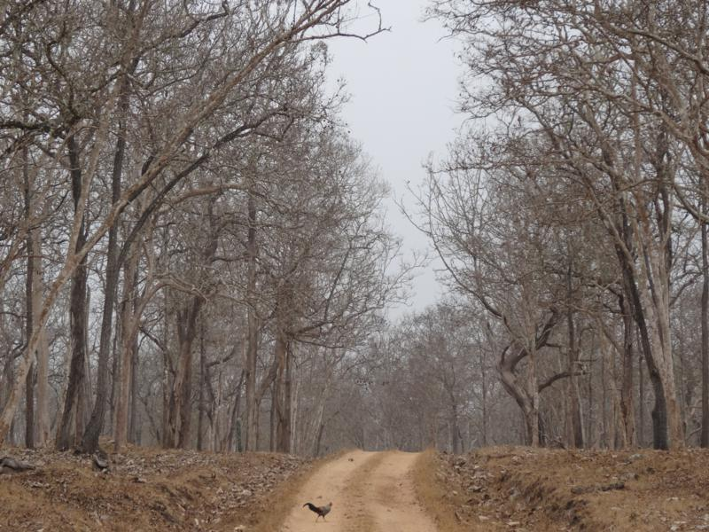 Dry deciduous forest at Nagarhole National Park