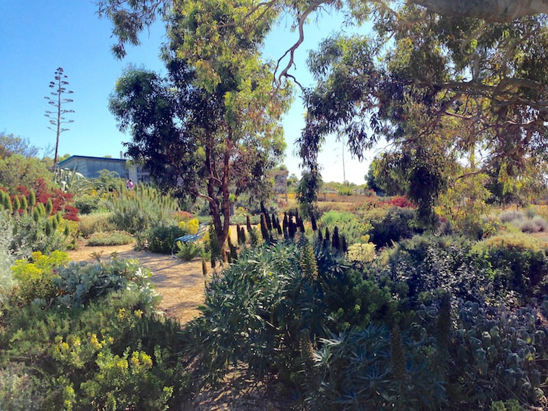 Colours and forms are distinctly Australian in nature at Boat's End garden. Photo: Janna Schreier