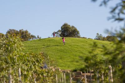 Nature Play at Royal Park_D Hannah_400x267