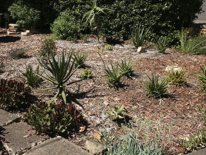 Front garden February 2012