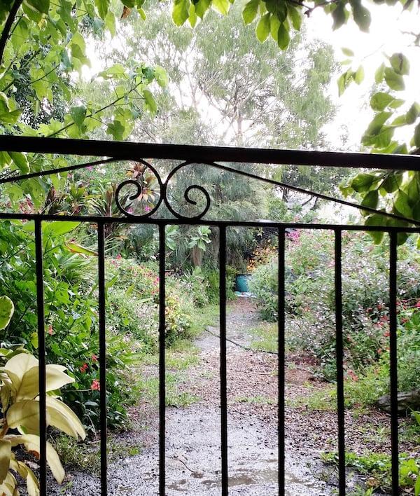 Welcome to my subtropical flower garden