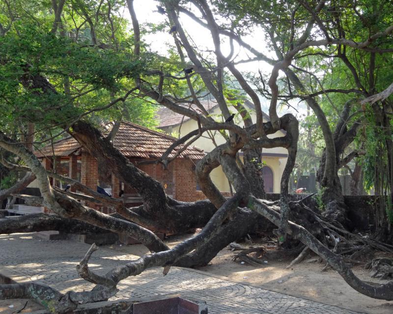 Sculpture tree (2)_800x640
