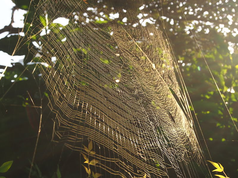 Sunlight on a spider's web