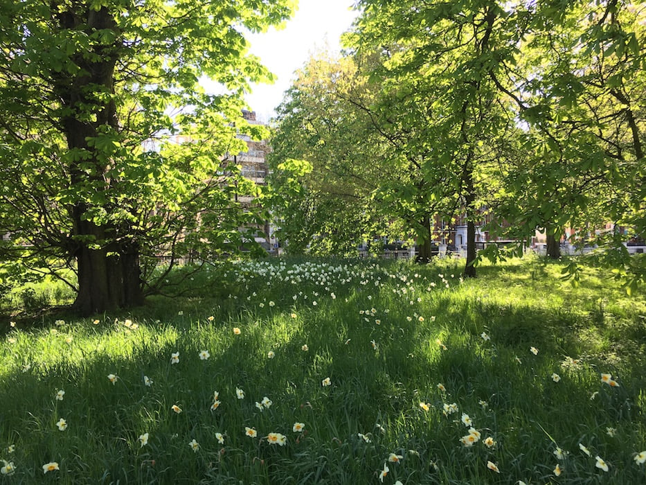 The city feels a world away in London's Hyde Park. Photo: Janna Schreier
