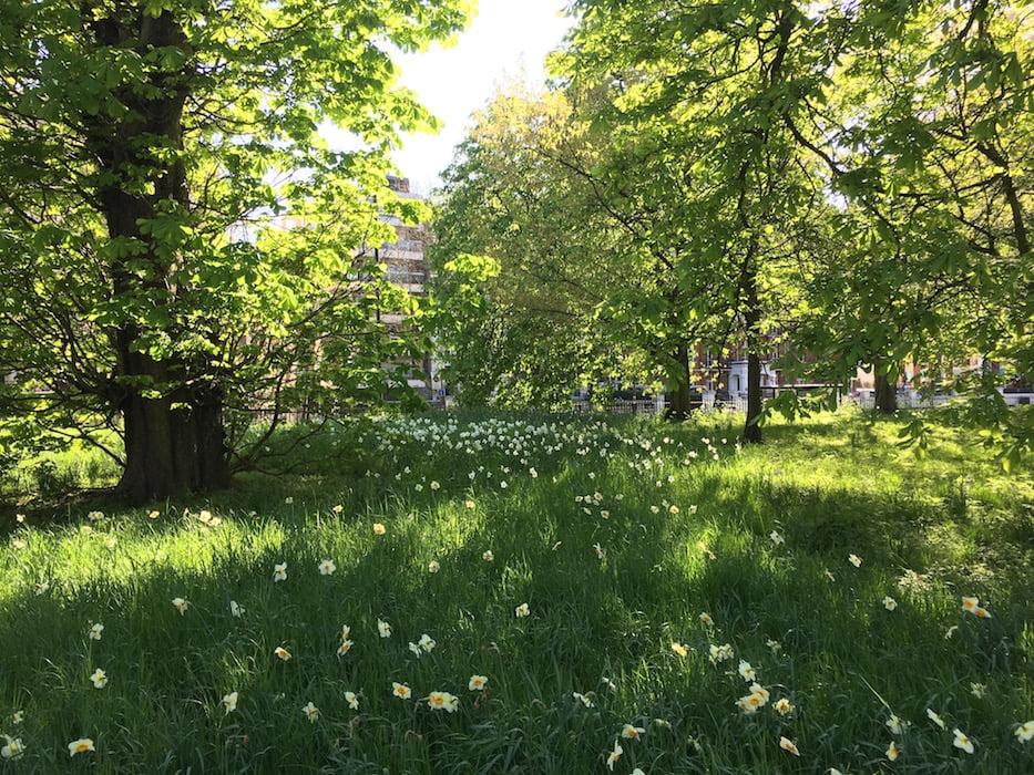 The city feels a world away in London's Hyde Park. Photo: Janna Schreier