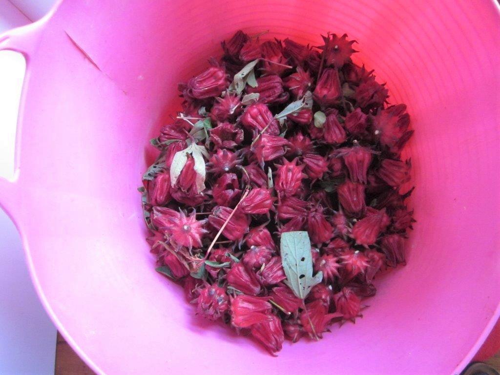 A bucket of Rosella 'fruit'