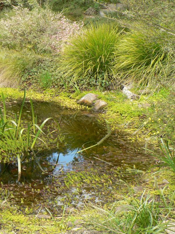 Monocotyledons prefer different heights beside pool, Larkin garden
