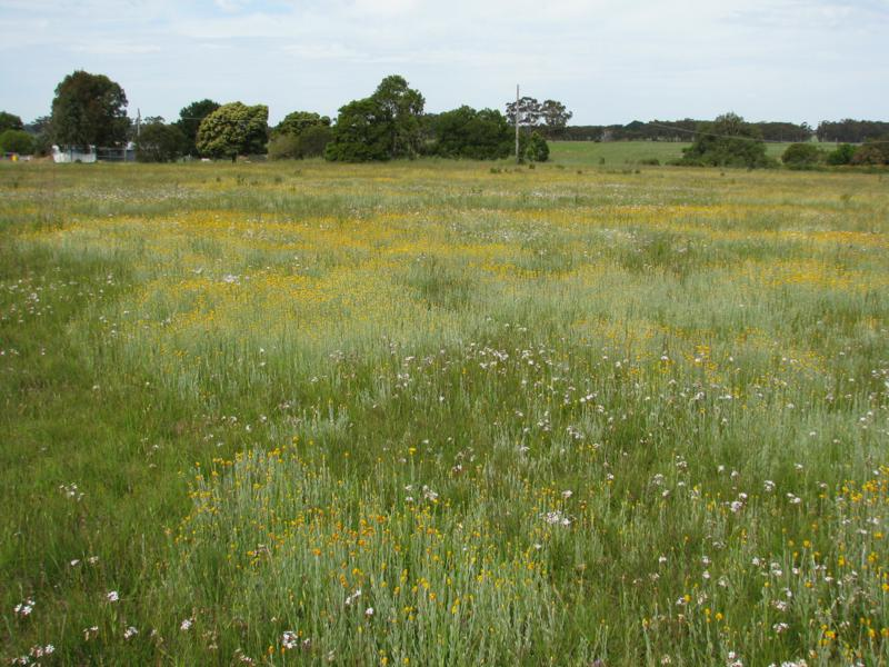 Woorndoo Grassland, Victoria, one of the few remaining on the basalt plains