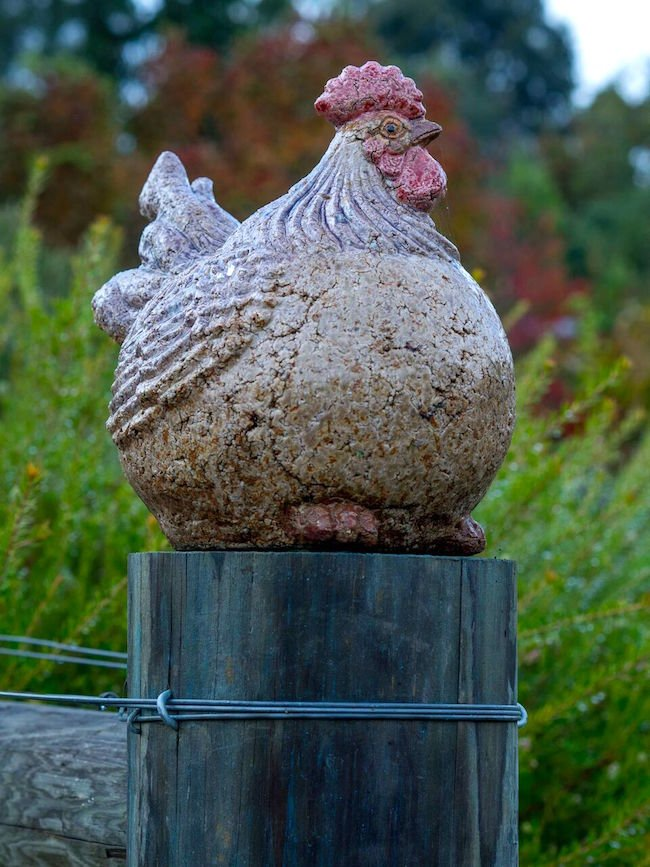 Chook on guard in 'Wit's End', a private garden at Beechworth we visited on the tour