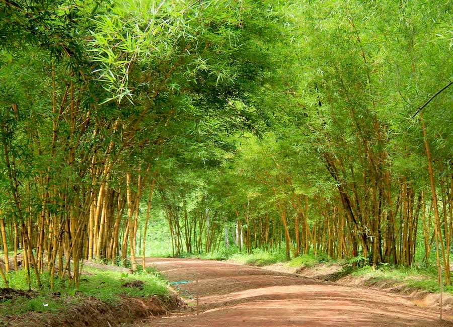 Pha Tad Ke Botanical Garden, Laos - Bamboo walkway