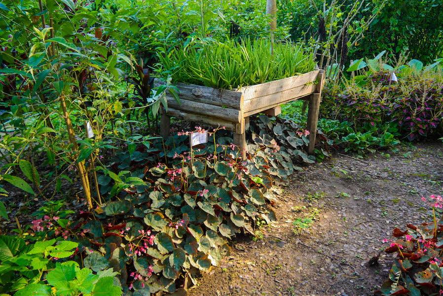 Pha Tad Ke Botanical Garden, Laos - Trial plot