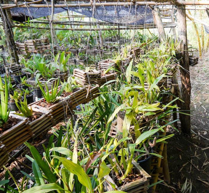 Pha Tad Ke Botanical Garden Laos - nursery