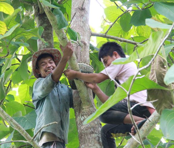 Pruning trees at Pha Tad Ke Botanical Garden, Laos