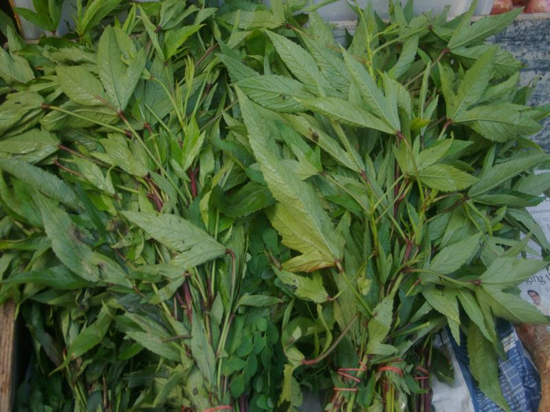 Rosella leaves in a Singapore market