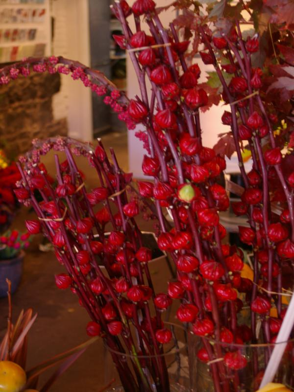 Rosellas even make great cutflowers - as in this Melbourne florist
