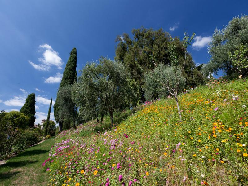 Flower meadow at Villa Freya. Photo Matteo Indri.