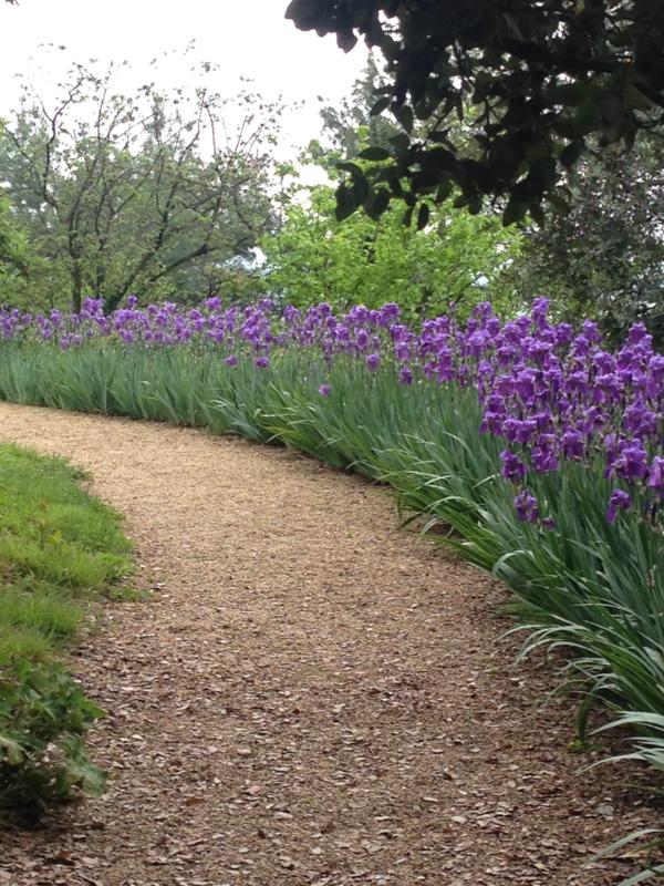 Villa Freya path with iris.