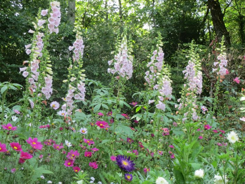 """""""Le jardin des plantes oubliées"""". Photo: Squires and Chappell"""