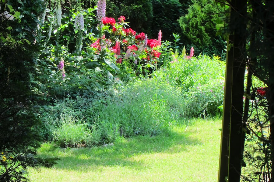 Amsterdam's secret gardens - glimpses of sunny flower gardens