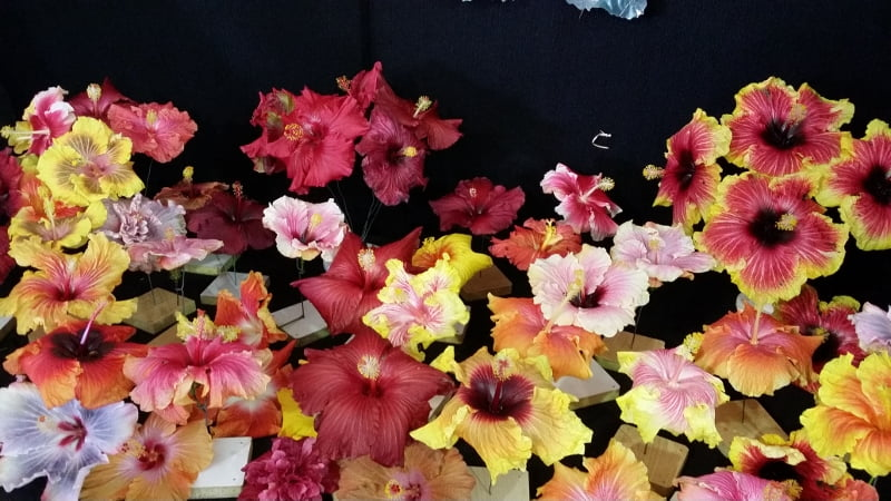 Hibiscus Society display