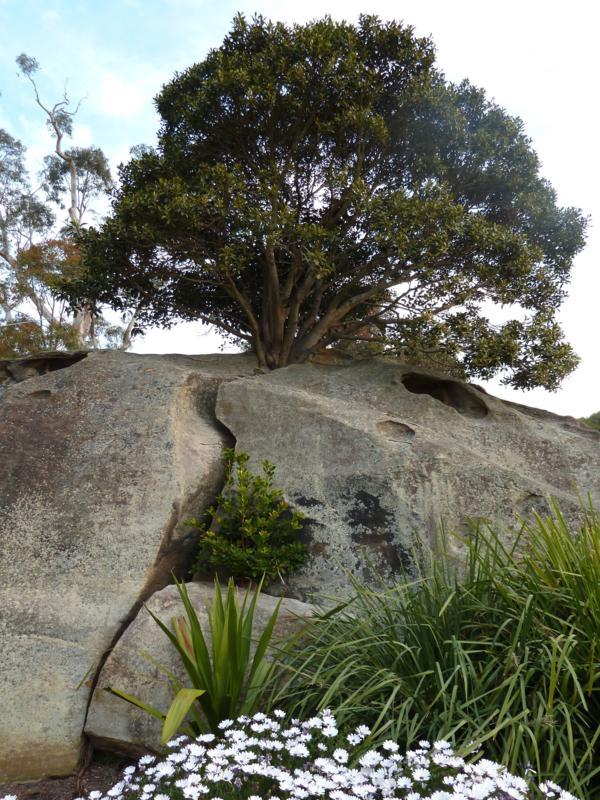 Nature's pot planting, at Royal Botanic Garden, Sydney. Photo by Heather Miles.