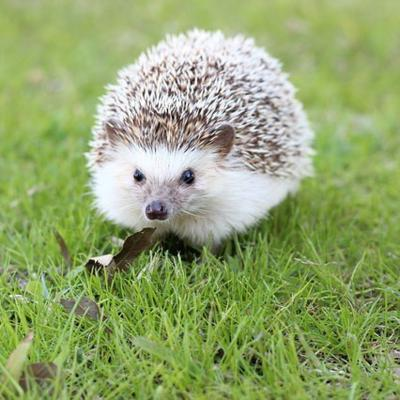 hedgehog-663638_640 (2)_400x400