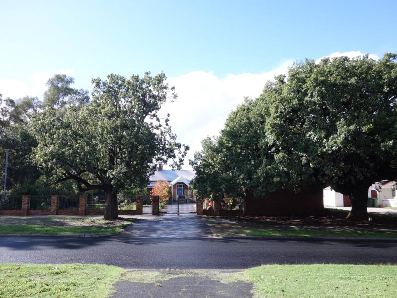 The suburb of Bassendean is full of heritage trees and buildings. The oak tree on the right was planted in 1902.